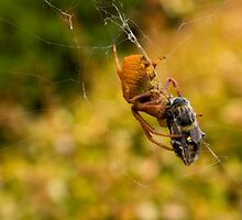 A Spiders Dinner by reflector