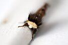 A moth in Hiding II by Adam Le Good