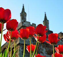 Tulips,Turrets and Tower by jonshort58