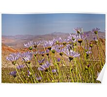 Mojave Asters and Desert Landscape Poster
