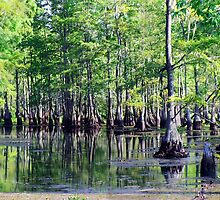 Texas Swamps by Robert Brown
