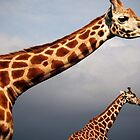 Giraffes on a cloudy day by oonat