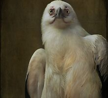 Inquisitiveness  by Mark Cooper