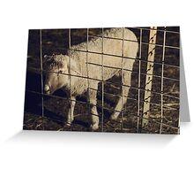 Christmas Sheep Greeting Card