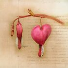 Bleeding Hearts by Michelle Anderson