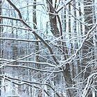 Snow covered trees by Melissa McKenzie
