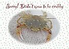 Didn't Mean To Be Crabby - Sorry Card by MotherNature