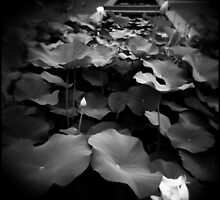 Lotus Pond by Sue Hammond