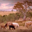 A Way of Life - Kanmantoo, The Adelaide Hills SA by Mark Richards
