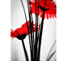 Red Flower Wall Art Photographic Print