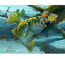 Large Mouth Bass and Blue Gills Photographic Print
