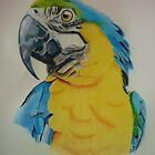Macaw by lee gordon