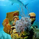 Caribbean Reef Shark Over Social Feather Dusterworms by natalia martin de pablos