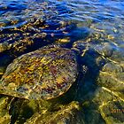 Turtle in the Thin by bamorris