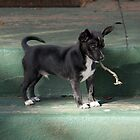 I'm a BIG dog now.... by teresalynwillis