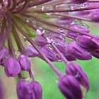 Inside An Ornamental Onion In The Rain by Tracy Faught