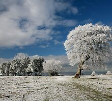 Frost on Rodborough common by Jeff  Wilson