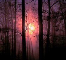 Winter Woods by NatureGreeting Cards ©ccwri