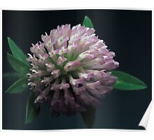 Discovering Red Clover Poster