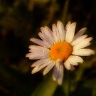 Dew a Daisy by vigor