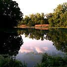 Barbour Pond, Swamp and Watershed on a Late Spring Day, Wayne NJ by Jane Neill-Hancock