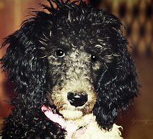 Puppy Duppy by ibjennyjenny