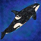 Killer Whale by Ben Geiger