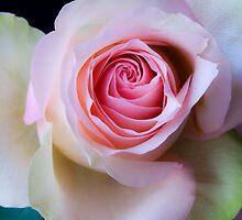 Pretty in pink by Nadja Drieling