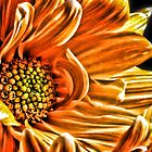 Orange Daisy by Robin Lee