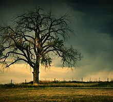 The Tree Of Life 2 by John  De Bord Photography