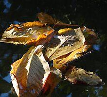 Leaves - Hojas by Bernhard Matejka