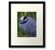 White Crowned Heron - Garza De Corona Blanca Framed Print