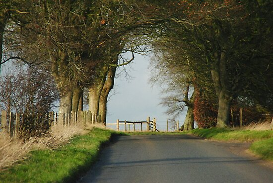 Country Road by BOUDEWIJN