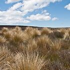 tussock in central plateau of NZ by Anne Scantlebury