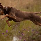 Gus leaps by Bill  Russo