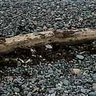 Beach Pebbles and tree Trunk by Colin Bentham