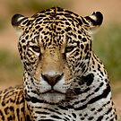 a portrait of Jaguar 005 by yesdigiterarte