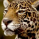 a portrait of Jaguar 007 by yesdigiterarte