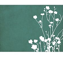 Buttercups in Blue & White Photographic Print