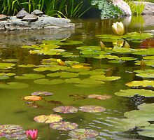 Lilly Pond in Golden Gate Park by David Denny