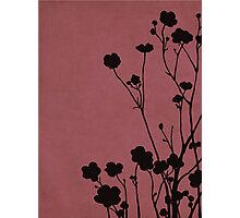 Buttercups in Pink & Gray Photographic Print
