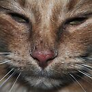 Close-up Kitty Cat by Jonice