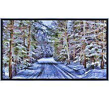 A Fairy Tale Forest with Snowy Evergreen Trees in the Cold Canadian Wilderness Photographic Print