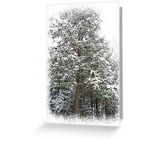 Frosty Snow Covered Pine Trees in a Scenic Wintry Forestscape after a Winter Storm in Quebec Greeting Card