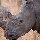 White Rhinoceros, Kruger National Park, South Africa by Erik Schlogl