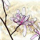Magnolias 2 by Barbara Glatzeder