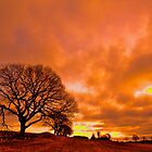 Moody sunrise oak by Trevor Harley