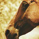 Horse Head in  warm tones by Przemysław Bródka