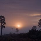 Holt Heath sunrise by Jennifer Bradford