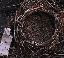 Empty Nest by Joanne  Bradley